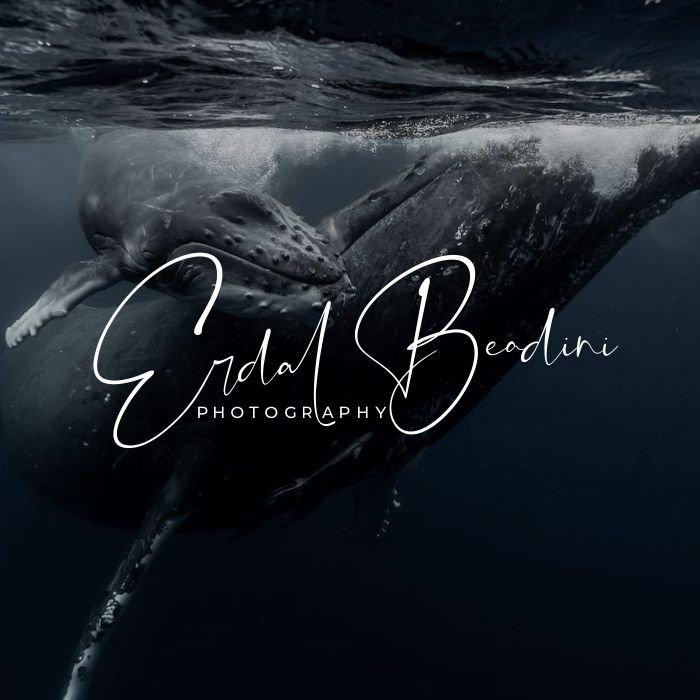 fotoğrafçı logo tasarımı